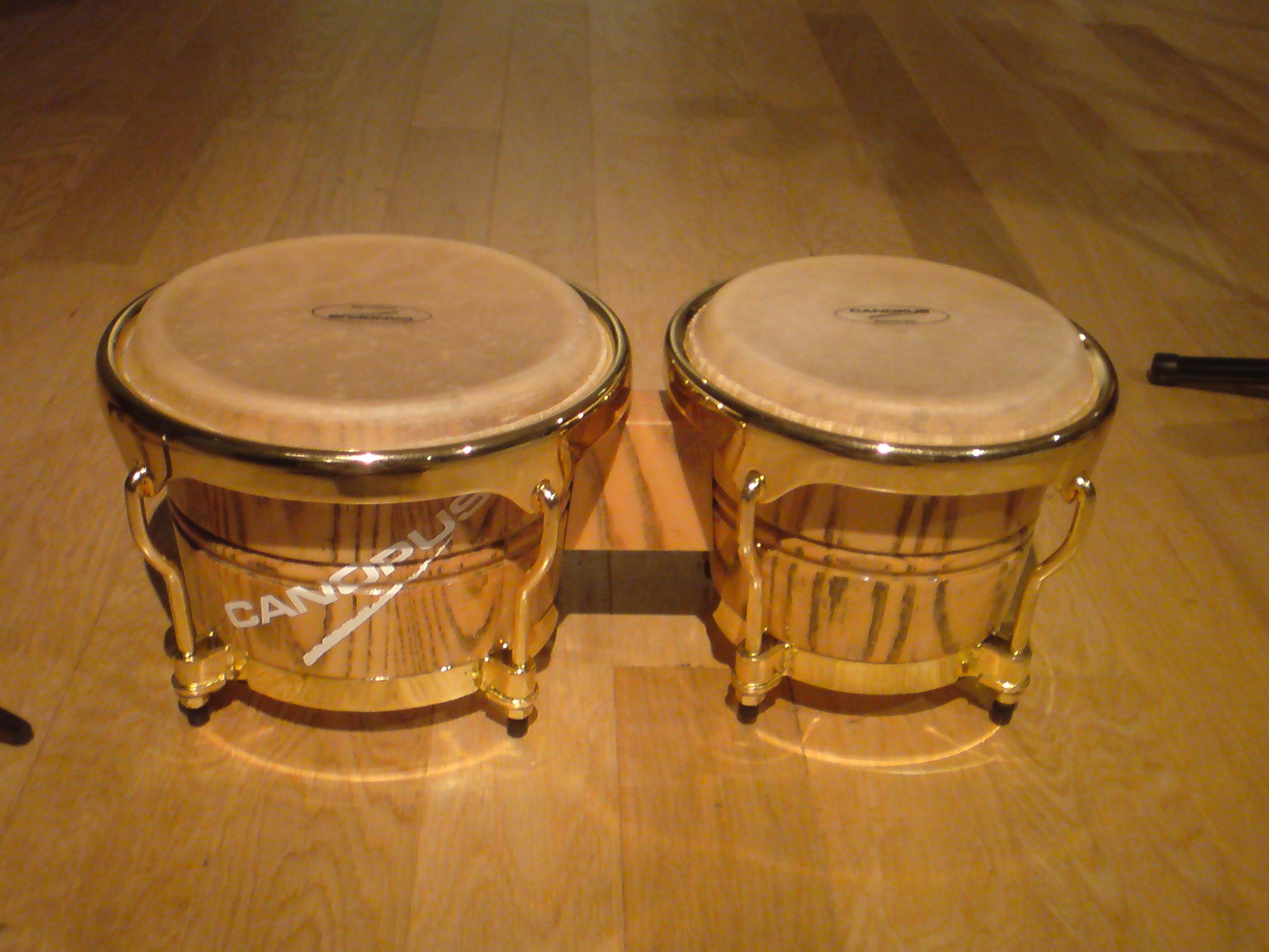 CANOPUS-bongo
